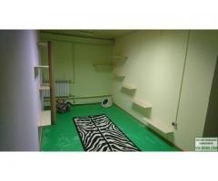 Гостиница для кошек с персональными апартаментами